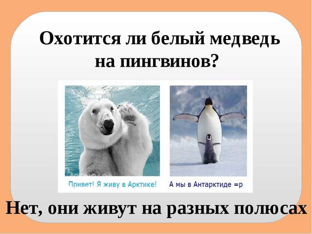 получении стандартных жив ли белый медведь отделений