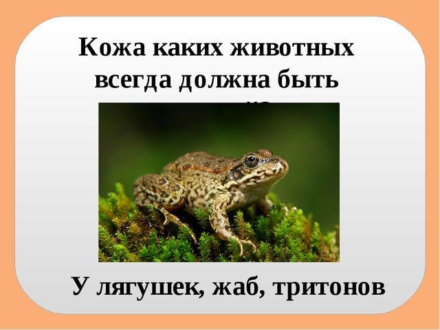 Кожа каких животных всегда должна быть влажной? У лягушек, жаб, тритонов