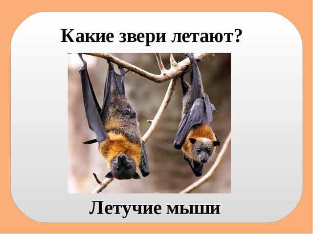 Какие звери летают? Летучие мыши