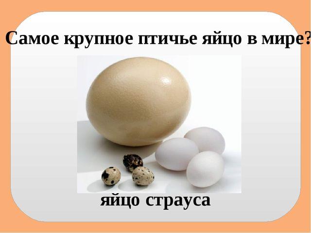 Самое крупное птичье яйцо в мире? яйцо страуса