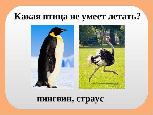 Какая птица не умеет летать? пингвин, страус