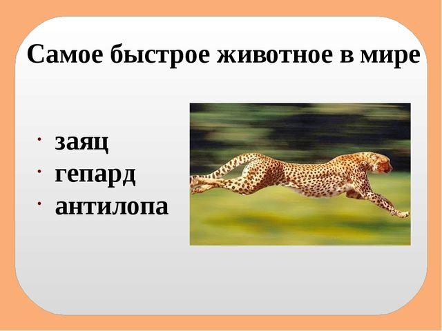 Самое быстрое животное в мире заяц гепард антилопа