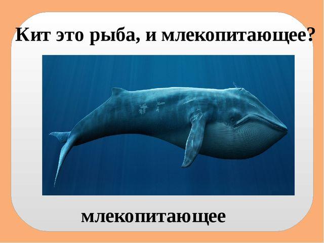 Кит это рыба, и млекопитающее? млекопитающее