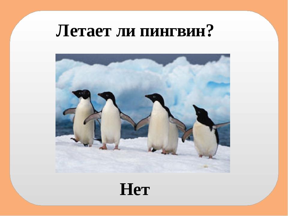 Летает ли пингвин? Нет