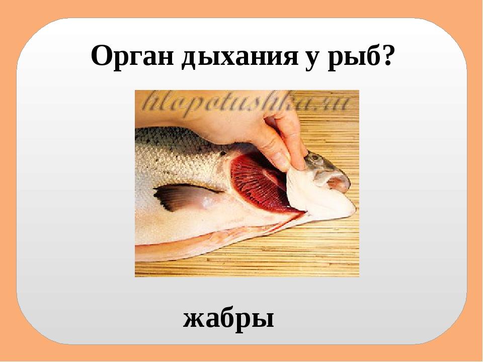 Орган дыхания у рыб? жабры