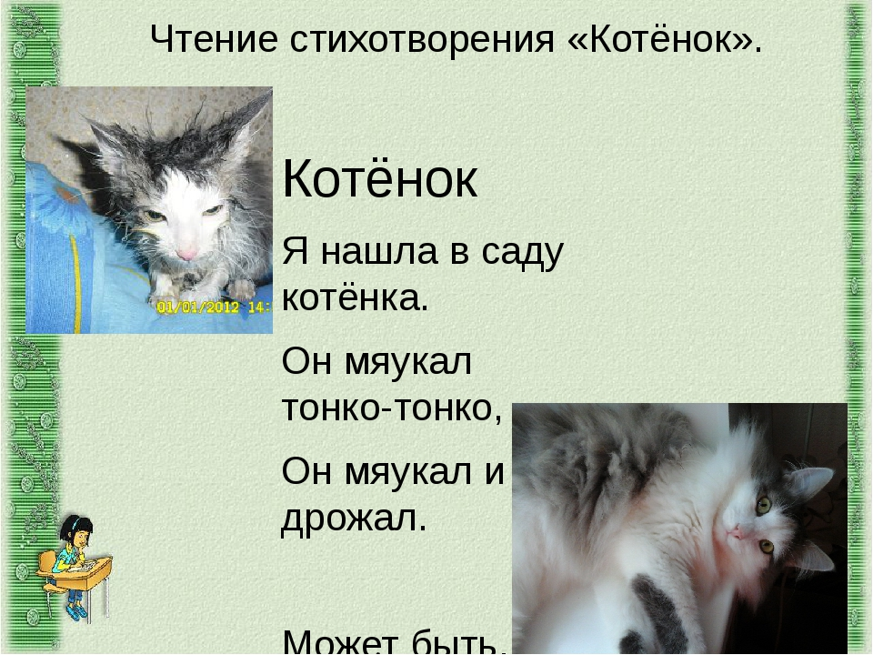 Чтение стихотворения «Котёнок». Котёнок Я нашла в саду котёнка. Он мяукал тон...