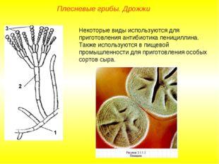 Плесневые грибы. Дрожжи Некоторые виды используются для приготовления антибио