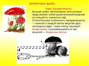 Класс Базидиомицеты. Высшие грибы, вегетативное тело которых представляет соб