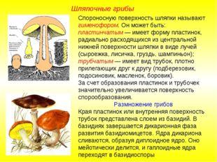 Спороносную поверхность шляпки называют гименофором. Он может быть: пластинча