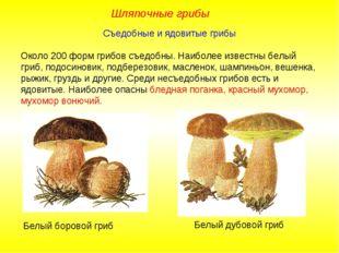 Съедобные и ядовитые грибы Около 200 форм грибов съедобны. Наиболее известны