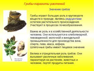 Значение грибов Грибы играют большую роль в круговороте веществ в природе, яв