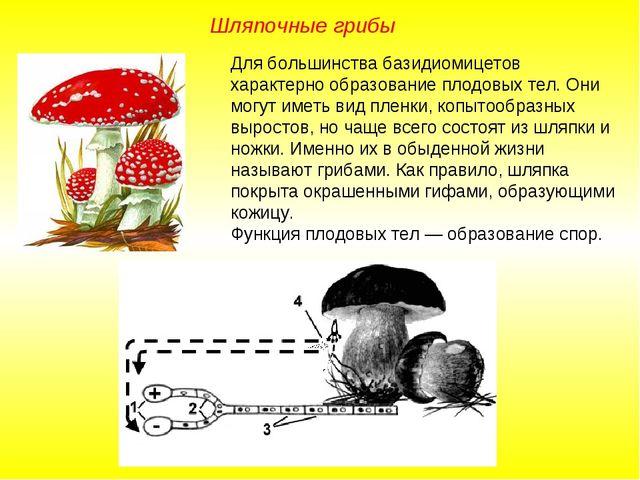 Для большинства базидиомицетов характерно образование плодовых тел. Они могут...