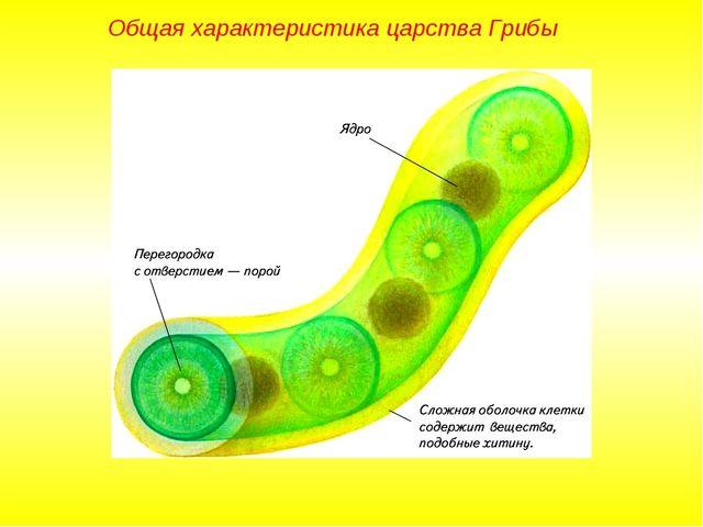 Общая характеристика царства Грибы