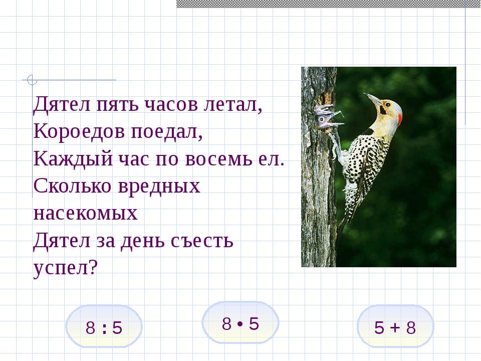 Дятел пять часов летал, Короедов поедал, Каждый час по восемь ел. Сколько вре...