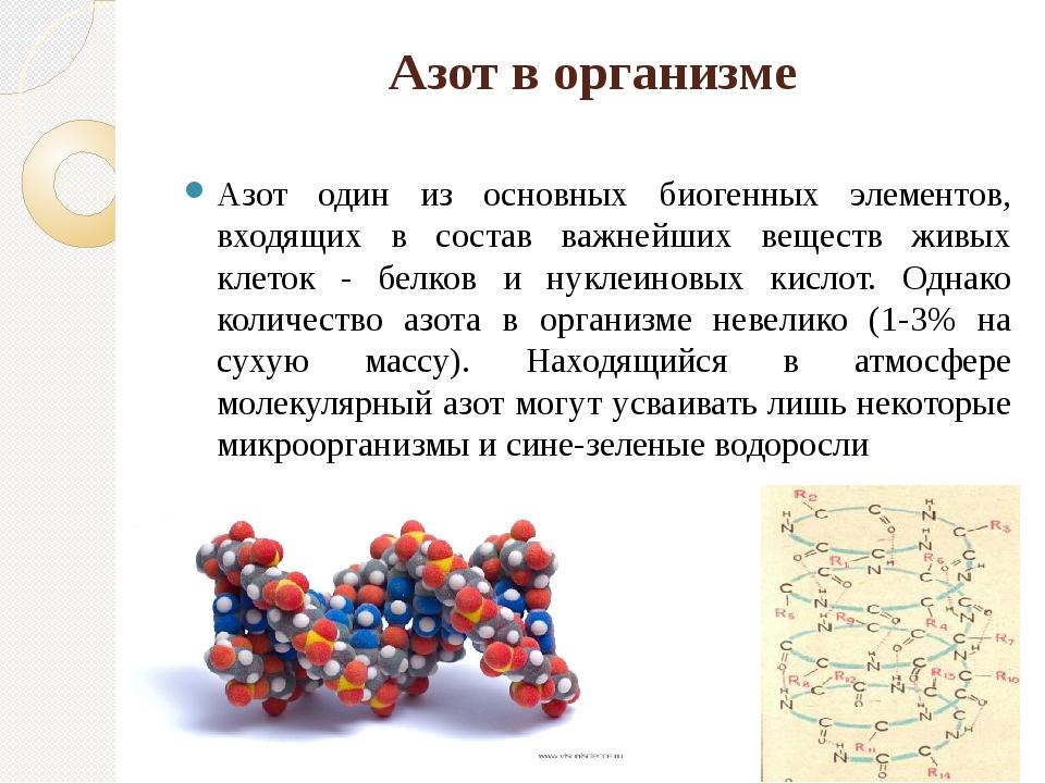 Азот в организме Азот один из основных биогенных элементов, входящих в состав...