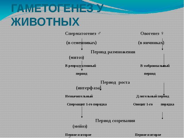 ГАМЕТОГЕНЕЗ У ЖИВОТНЫХ Сперматогенез ♂  Овогенез ♀ (в семенниках)  (в яични...