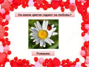 На каком цветке гадают на любовь? Ромашка