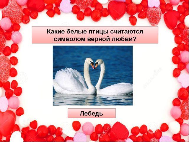 Какие белые птицы считаются символом вернойлюбви? Лебедь
