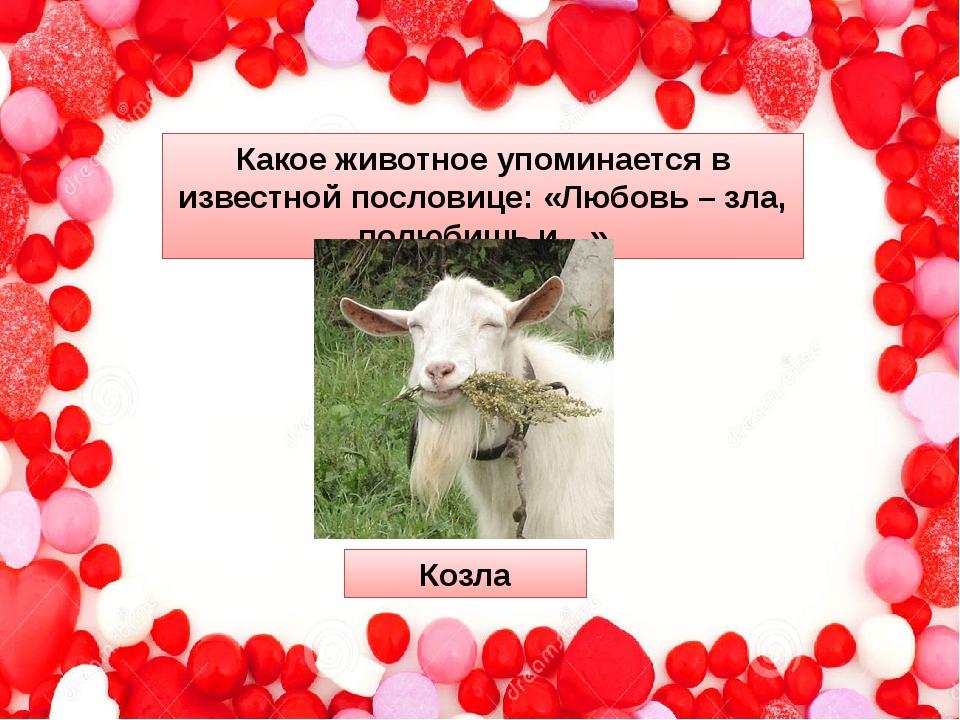 Какое животное упоминается в известной пословице: «Любовь – зла, полюбишь и…»...