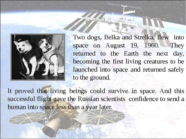 Two dogs, Belka and Strelka, flew into space on August 19, 1960. They return...