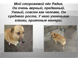 Мой сторожевой пёс Радик. Он очень верный, преданный. Умный, совсем как челов