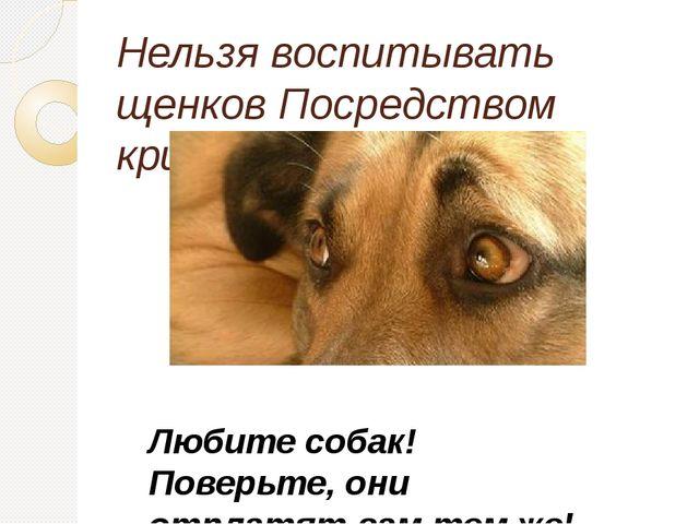 Нельзя воспитывать щенков Посредством крика и пинков Любите собак! Поверьте,...