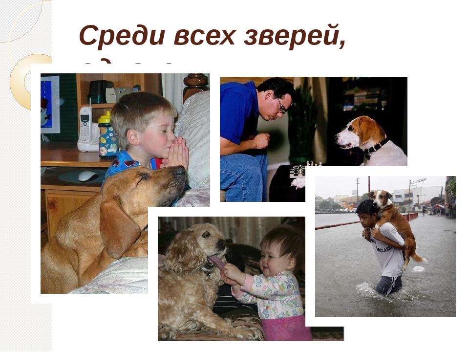 Среди всех зверей, однако, людям лучший друг - собака