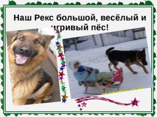 Наш Рекс большой, весёлый и игривый пёс!