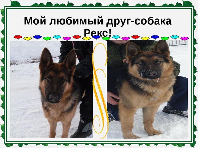 Мой любимый друг-собака Рекс!
