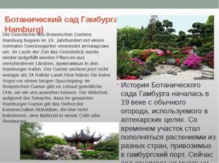 Ботанический сад Гамбурга(Botanischer Garten Hamburg) История Ботанического с
