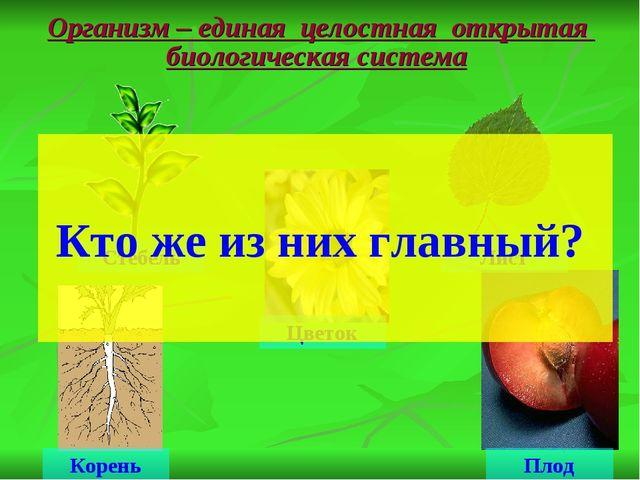 Организм – единая целостная открытая биологическая система Стебель Лист Корен...