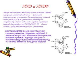 НАД и НАДФ НИКОТИНАМИДАДЕНИНДИНУКЛЕОТИД (НАД), сложное органическое соединени