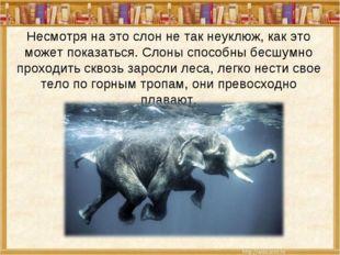 Несмотря на это слон не так неуклюж, как это может показаться. Слоны способны