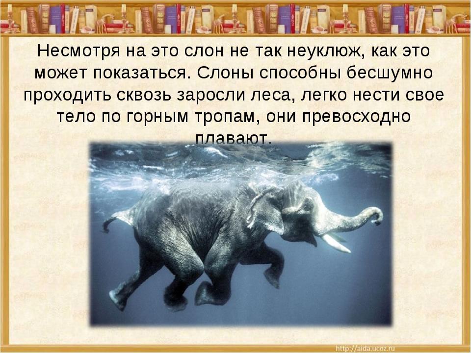 Несмотря на это слон не так неуклюж, как это может показаться. Слоны способны...