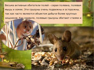 Весьма активные обитатели полей – серая полевка, полевая мышь и хомяк. Эти гр