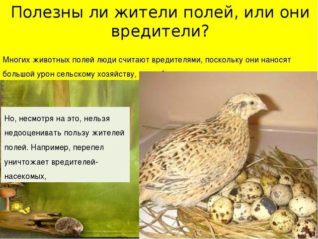 Полезны ли жители полей, или они вредители? Многих животных полей люди считаю...