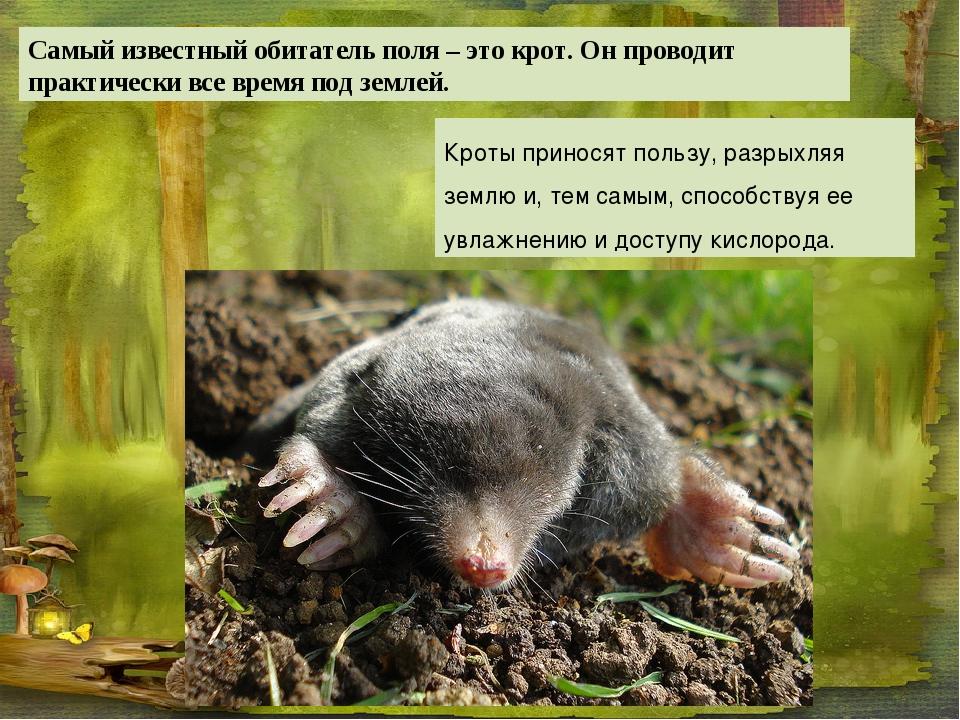 Кроты приносят пользу, разрыхляя землю и, тем самым, способствуя ее увлажнени...