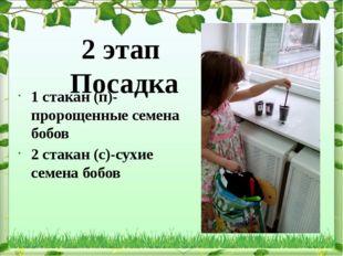 2 этап Посадка 1 стакан (п)-пророщенные семена бобов 2 стакан (с)-сухие семен