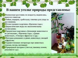 В нашем уголке природы представлены: Комнатные растения; по возрасту, подписа