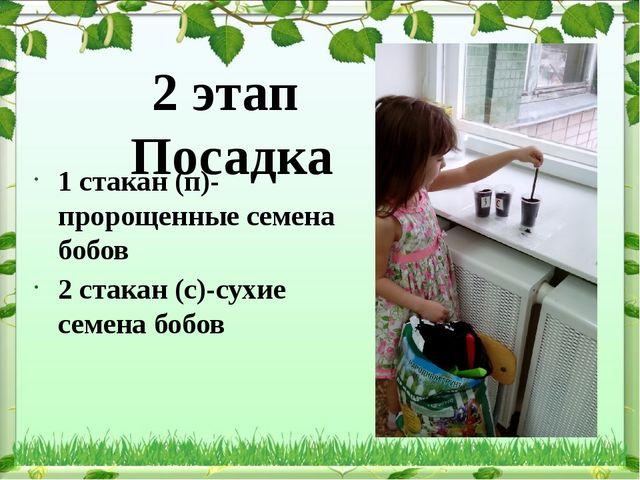 2 этап Посадка 1 стакан (п)-пророщенные семена бобов 2 стакан (с)-сухие семен...