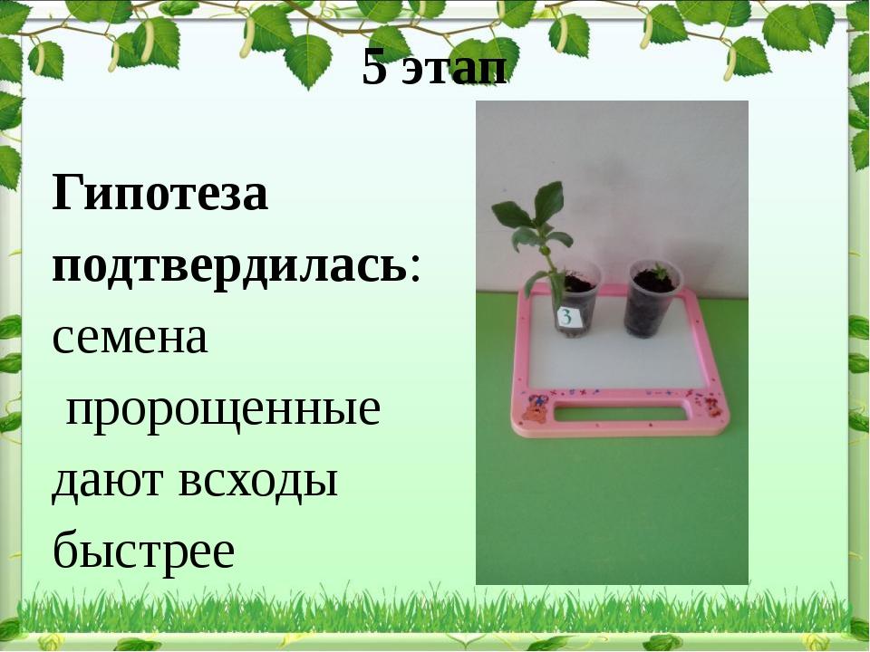 5 этап Гипотеза подтвердилась: семена пророщенные дают всходы быстрее