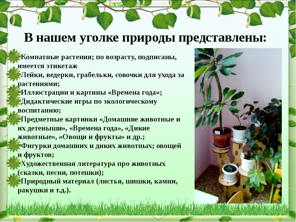 В нашем уголке природы представлены: Комнатные растения; по возрасту, подписа...