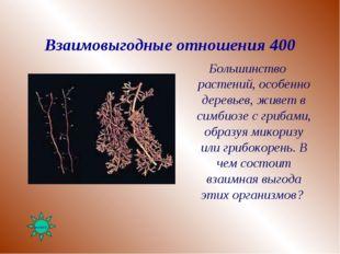 Взаимовыгодные отношения 400 Большинство растений, особенно деревьев, живет в