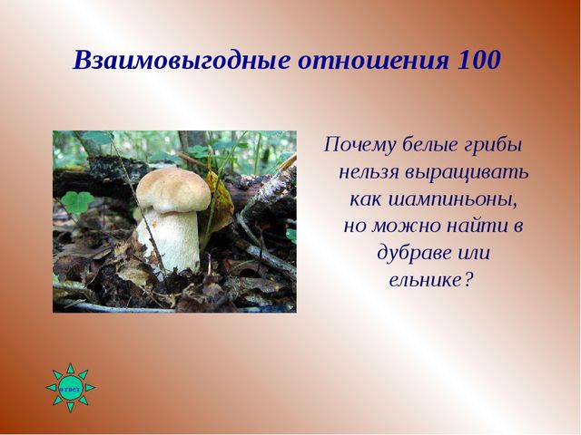 Взаимовыгодные отношения 100 Почему белые грибы нельзя выращивать как шампинь...