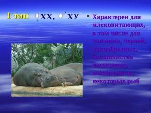 1 тип Характерен для млекопитающих, в том числе для человека, червей, ракообр