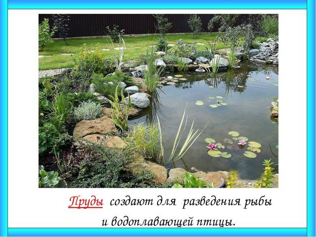 Пруды создают для разведения рыбы  и водоплавающей птицы.