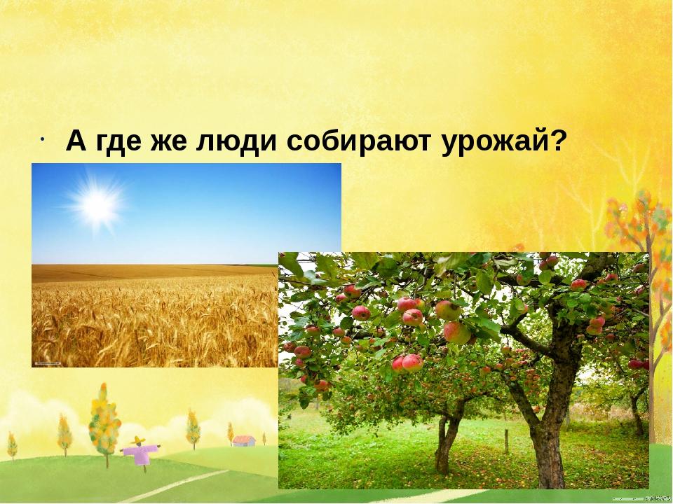 А где же люди собирают урожай?