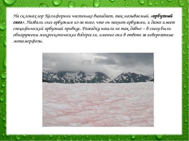 На склонах гор Калифорнии частенько выпадает, так называемый, «арбузный снег»...