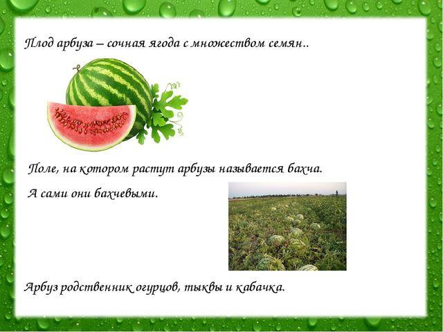 Плод арбуза – сочная ягода с множеством семян.. Поле, на котором растут арбуз...