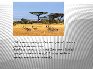 Сава́нны — это засушливые пространства земли, с редкой растительностью. В са
